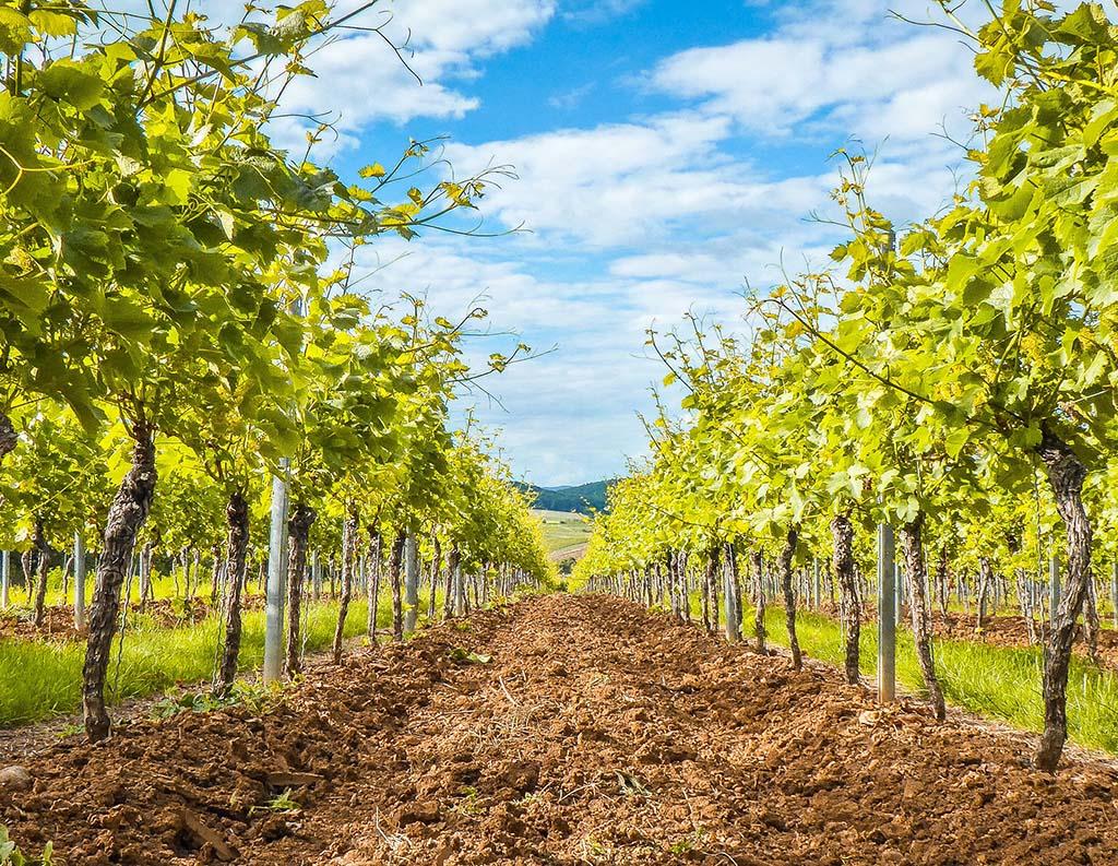 Visit Wine Farms in the Cape